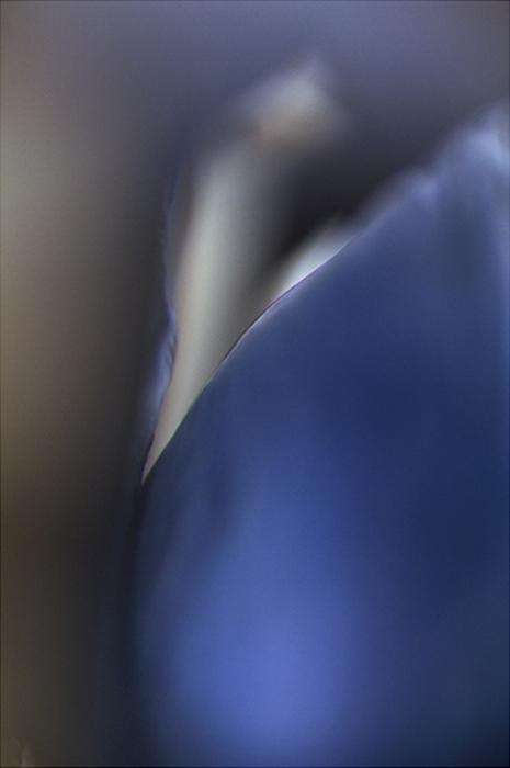 05_Azur n°6-©v.winckler-2007