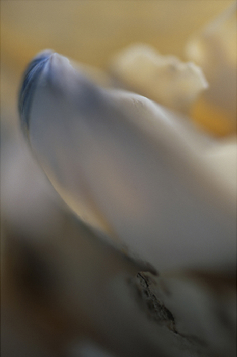 06_Azur n°1-©v.winckler-2007