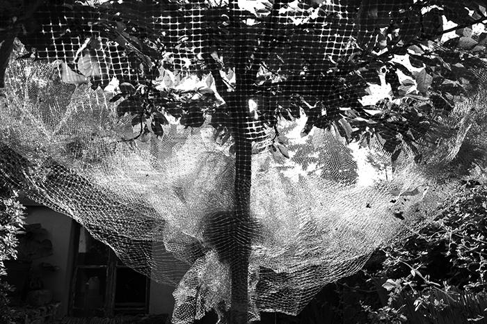 08_cerisier.©vwinckler